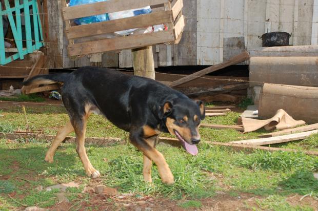 Donos de cão que atacou criança de três anos são indiciados em Vacaria Fabiano Nunes, especial /