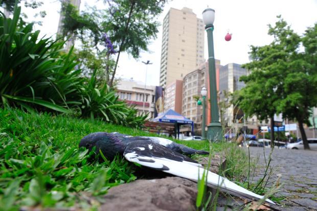 Secretário não pretende pedir imagens das câmeras antes de saber a causa da morte das pombas em Caxias Roni Rigon/