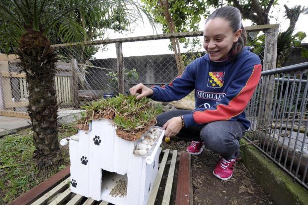 Alunos criam casas de cachorros com telhado ecológico em Caxias do Sul Juan Barbosa/Agencia RBS
