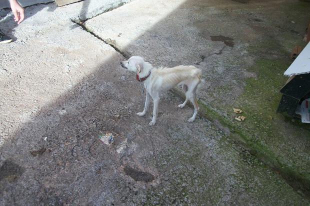 Donos de animais maltratados terão de pagar despesas para cuidados dos bichos em Bento Gonçalves Brigada Militar/ Agência RBS/