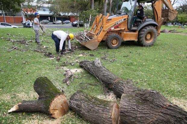 Autorizações para cortes de árvores podem levar até seis meses em Caxias Fernando Gomes/Agencia RBS