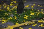 Primavera é o tema do ensaio fotográfico desta semana