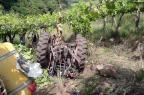 Identificado agricultor que morreu esmagado por trator em Nova Pádua CRPO Serra, divulgação/