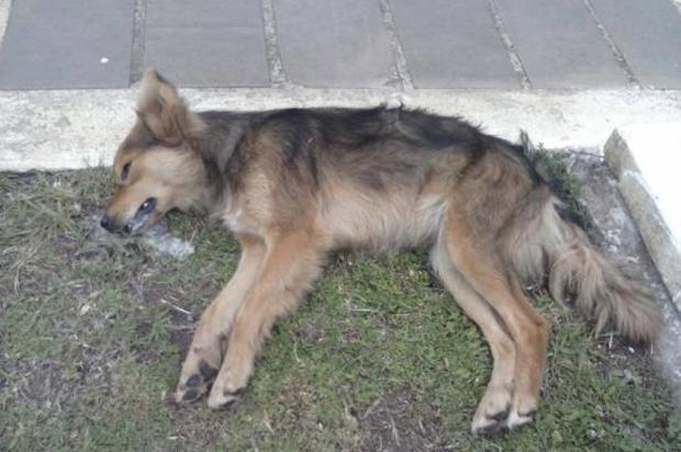 Mais de 30 cães e gatos aparecem mortos em Bom Jesus Associação Bonjesuense Protetores dos Animais  / Facebook /reprodução/clicRBS