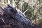 Veículo cai em barranco, incendeia e uma pessoa morre em Caxias Porthus Junior/Agência RBS/