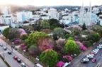 Estudo aponta Guaporé como o município da Serra que mais perdeu Mata Atlântica entre 2012 e 2013 Não se aplica/Caminhos de Guaporé