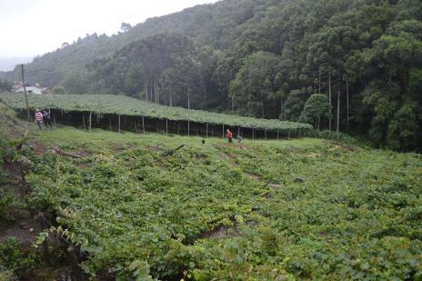 Após temporal, prefeitura auxilia agricultores que tiveram prejuízos em Flores da Cunha (Bárbara Lipp/ Divulgação/)