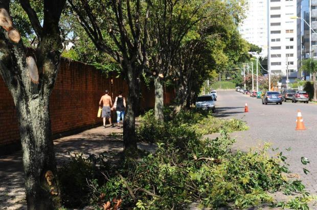 Pedidos de corte e poda de árvores deverão ser publicados no site da prefeitura de Caxias Jonas Ramos/Agencia RBS