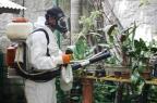 Morre primeira vítima de dengue contraída no RS Betina Carcuchinski/Divulgação/PMPA