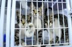 Projeto prevê ordem de prioridade para castração de animais em Bento Gonçalves Germano Rorato/Agencia RBS