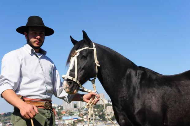 Cavalo crioulo lidera a preferência do gaúcho Roni Rigon/Agencia RBS
