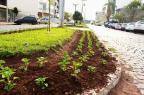 Avenida Venâncio Aires, em São Marcos, recebe novas mudas de flor Prefeitura de São Marcos/Divulgação/