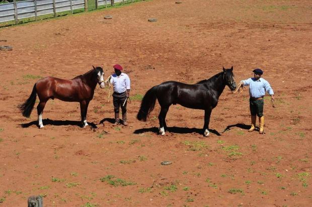 Casa de shows vira palco de leilão de cavalos crioulos em Caxias Jonas Ramos/Agencia RBS