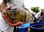 Venda de peixe vivo no centro de Caxias ocorrerá também no inverno Ricardo Wolffenbüttel/Agencia RBS