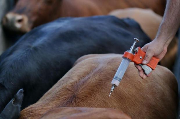 Vacinação contra a febre aftosa deve imunizar pelo menos 604 mil animais na Serra Lauro Alves/Agencia RBS