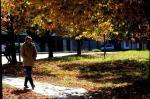 Outono Caxiense