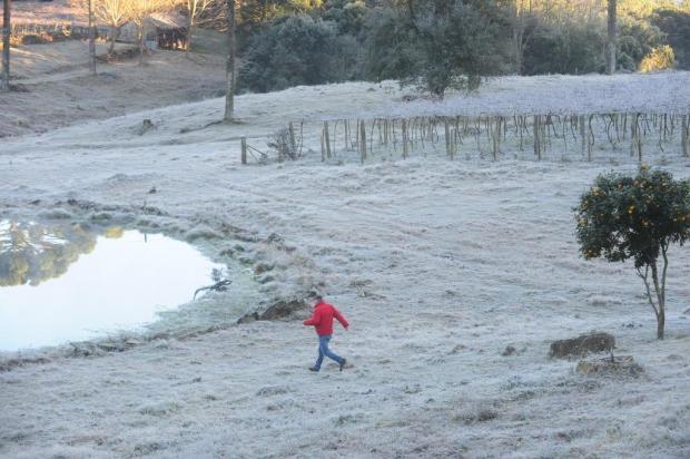 Ondas de frio de julho e agosto compensam chegada tardia do inverno e favorecem agricultura da Serra Roni Rigon/Agencia RBS