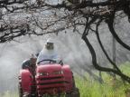 Contra doenças, produtores de uva da Serra fazem tratamento especial nas videiras Roni Rigon/Agencia RBS