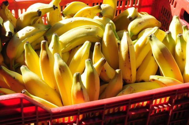 Banana caturra está 150% mais cara em Caxias neste ano Roni Rigon/Agencia RBS