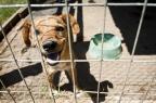 Vereadores de Bento Gonçalves aprovam criação de órgão para tratar do bem-estar dos animais Mateus Bruxel/Agencia RBS