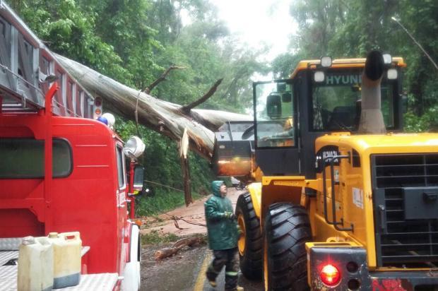 BR-116 permanece bloqueada no Km 180, em Nova Petrópolis PRF / Divulgação/Divulgação