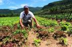 Agricultores de Caxias do Sul fazem balanço do prejuízo causado pela chuva (Porthus Junior/Agencia RBS)