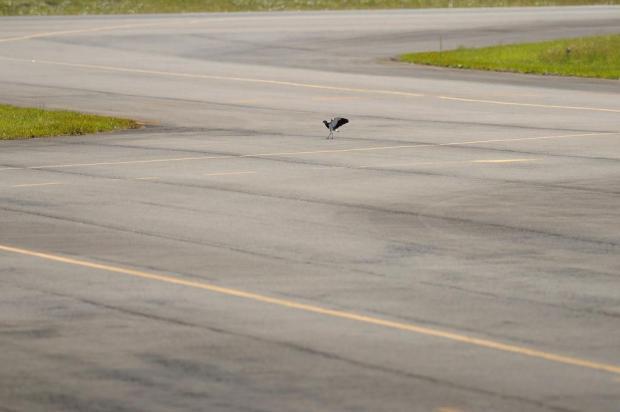 Colisão com pássaro pode ter forçado avião que saiu de Caxias a pousar em Porto Alegre Diogo Sallaberry/Agência RBS