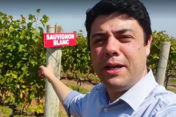 3por4: Vinhos da Serra estarão no Globo Repórter desta sexta-feira reprodução/reprodução