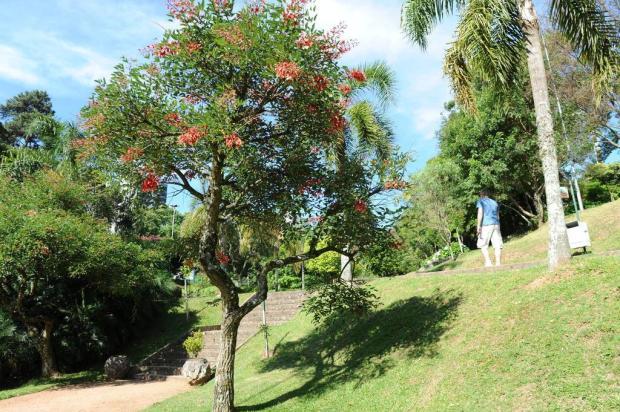 Arborização urbana de Caxias: resultados mostram 463 mil árvores, mas pouca biodiversidade Porthus Junior/Agencia RBS