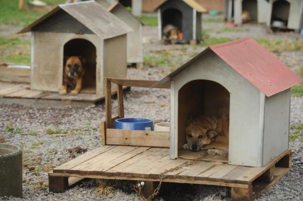 Onze empresas se habilitam para construir Centro de Bem-Estar Animal em Caxias Diogo Sallaberry/Agencia RBS