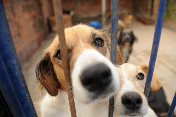 Centro de Amparo Animal de Farroupilha está com lotação máxima há oito meses Diogo Sallaberry/Agencia RBS
