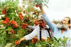 Pomares de maçãs nos campos de Vacaria Nereu de Almeida/Agencia RBS