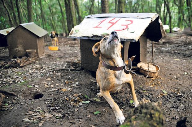 Justiça determina que ONG Apas retire cerca de 200 animais de área invadida em Caxias Marcelo Casagrande / Agência RBS/Agência RBS