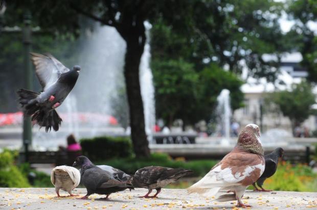 Dona Idiati, a protetora dos pombos da Praça Dante, em Caxias, pede socorro Roni Rigon/Agencia RBS