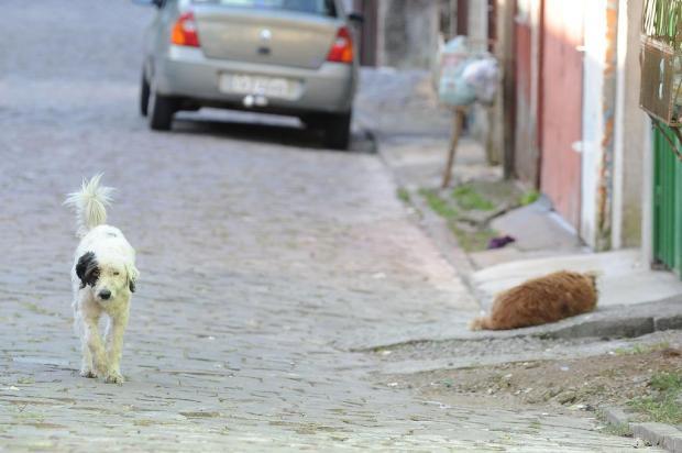 Castração de animais em bairros de Garibaldi ocorre pela primeira vez neste sábado Felipe Nyland/Agencia RBS