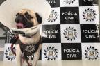 Cachorro furtado por vizinho é resgatado pela Polícia Civil, em Caxias Polícia Civil/Divulgação