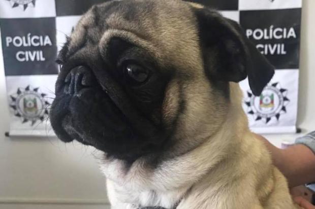 Furtado há nove meses, cachorro é encontrado pela Polícia Civil de Caxias Polícia Civil/Divulgação