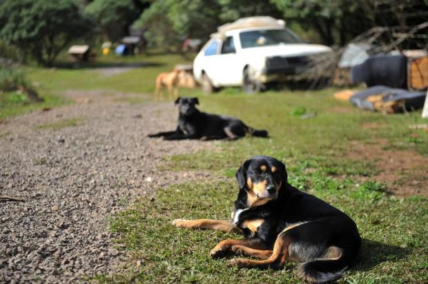 70 cachorros aguardam por adoção na Apas, em Caxias Diogo Sallaberry/Agencia RBS