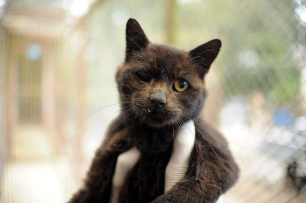 Soama promove bazar para arrecadar recursos para castrações de cães e gatos Diogo Sallaberry/Agencia RBS