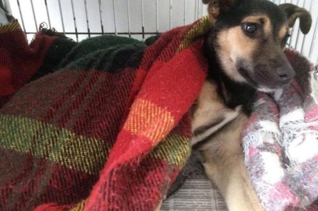 Cachorra é resgatada depois de agressão, em Bento Gonçalves Clinica São Francisco de Assis/Arquivo Pessoal