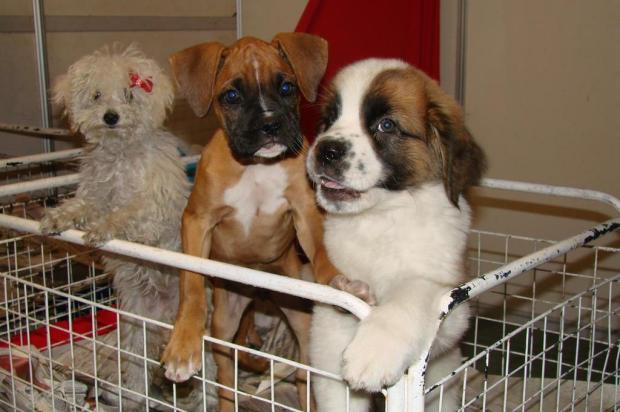3por4: Feira de adoção de cães e gatos ocorre em Flores da Cunha Marcelo Becker/Agencia RBS