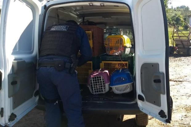 Mais de 10 animais são mortos e esquartejados em Forqueta, em Caxias Proteção Animal Caxias/divulgação