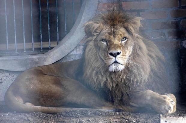 Memória: O encantador Zoológico da UCS Jefferson Botega/Agencia RBS