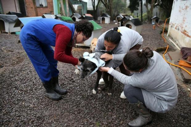 Animais do Canil Municipal, em Caxias do Sul, recebem roupas para enfrentar o frio Fabio Campelo/divulgação