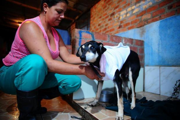 Funcionários vão cuidar para que animais do Canil Municipal de Caxias não fiquem com as roupas molhadas Marcelo Casagrande/Agencia RBS