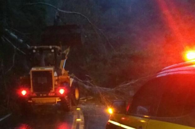 Temporal provoca queda de árvores em pelo menos três pontos da BR-116 na Serra PRF / Divulgação/Divulgação