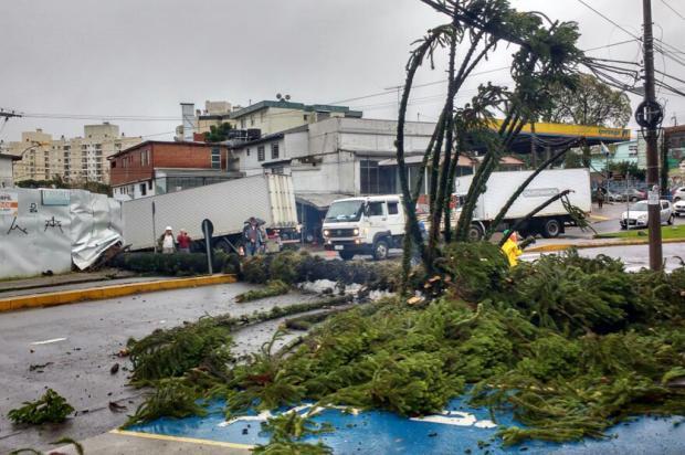 Vendaval derruba pinheiro e bloqueia rua no bairro Marechal Floriano, em Caxias Adriano Duarte / Agência RBS/Agência RBS