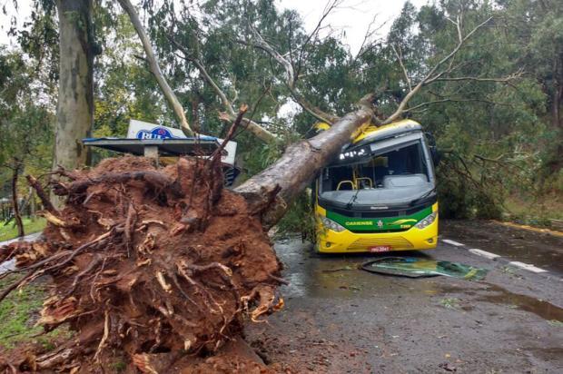 Árvore cai sobre ônibus da Caxiense durante temporal em Caxias Adriano Duarte / Agência RBS/Agência RBS