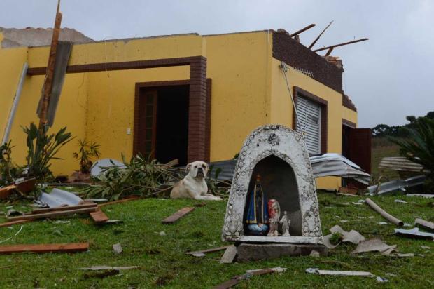 Após temporal, animais passam por atendimento veterinário em Vila Oliva, interior de Caxias Petter Campagna Kunrath / divulgação/divulgação