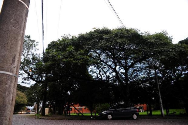 RGE apresenta proposta para evitar que árvores caiam sobre redes elétricas em Caxias do Sul Marcelo Casagrande/Agencia RBS